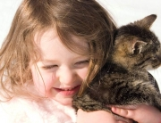 питомник для кошек